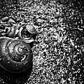 Snail Shell by Natapol Chananuwong