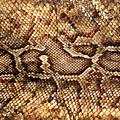 Snake Skin by Abner Merchan