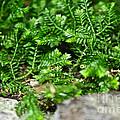 Sneaky Green by Susan Herber