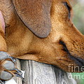 Sniffing Out Dreams by Kim Henderson