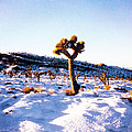 Snow Cactus by Karen Chappell
