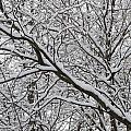 Snow Covered Branches by Angela Hansen