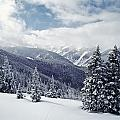 Snow Covered Pine Trees On Mountain by Axiom Photographic