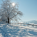 Snow Covered Tree With Sun Shining Through It by © Peter Boehi