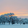 Snow Covered Trees At Sunset by Nancy Newell