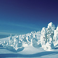 Snow Covered Trees, Yellowstone National Park, Wyoming, Usa by Medioimages/Photodisc