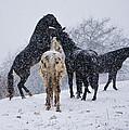 Snow Day I by Betsy Knapp