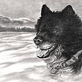 Snow Dog by Kathleen Kelly Thompson