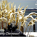 Snow Dust Christmas Card by Karen Wiles