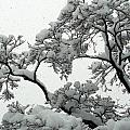 Snow Falling On Branches by Angela Hansen