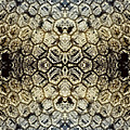 Snow Fence - Abstract by Ellen Heaverlo