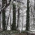 Snow In Atlanta by Michael Waters