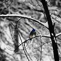 Snow On Beak by Simone Hester
