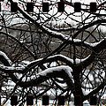 Snow On Branches by Alice Gipson