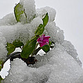 Snow On The Flowers by Debbie Portwood