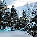 Snow Pines by Anne Ferguson