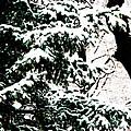Snow by Simone Hester