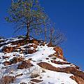 Snow Tree by Jack Norton