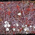 Snowberries And Rosehips by Will Borden