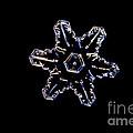 Snowflake by Ted Kinsman