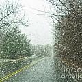 Snowing Morning by Carolyn Fox