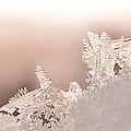 Snowland by Beth Riser