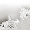 Snowland Bw by Beth Riser