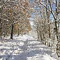Snowpath by David Birchall