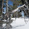 Snowshoeing On A Clear Day by Lisa Spencer Osterhoudt
