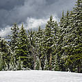 Snowstorm In The Cascades by Greg Nyquist