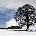 Snowy Field And Tree by John Short