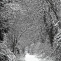 Snowy Path by Linsey Williams