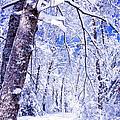 Snowy Path by Rob Travis