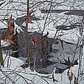 Snowy Pond by Aimee L Maher ALM GALLERY