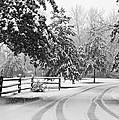 Snowy Tracks by Brenda Conrad