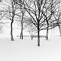 Snowy Trees And Park Benches by Meera Lee Sethi