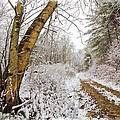 Snowy Watercolor by Debra and Dave Vanderlaan