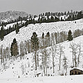 Snowy Wilderness by Wes and Dotty Weber