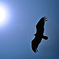 Soaring Free by Mary Anne Williams