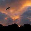 Soaring In The Midnight Sun by Joe Bonita