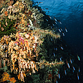 Soft Coral Seascape And Rainbow by Todd Winner