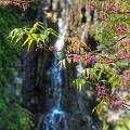 Soft Focus Blossom And Waterfall by Sarah Broadmeadow-Thomas