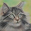 Soft Kitty by Julie Brugh Riffey