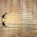 Soft Landing by Russ Harris