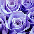 Soft Lavender Roses by Angelina Vick