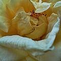 Soft Melody by Kevin D Davis