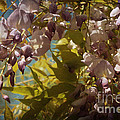 Soft Pastel Spring by Lisa Porier