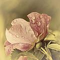 Soft Peddles by Alisa Andersen