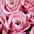 Soft Pink Roses by Angelina Vick