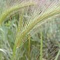 Soft Rain On Grass by Ramie Liddle
